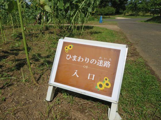 国営昭和記念公園 ひまわりの迷路