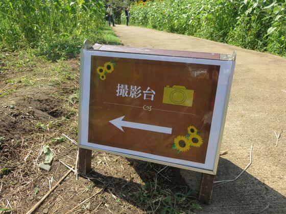 国営昭和記念公園 ひまわり 撮影台