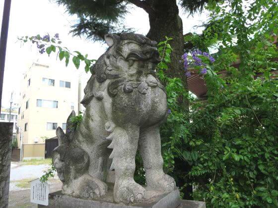 今戸神社 狛犬 左