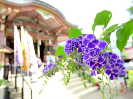 今戸神社 花