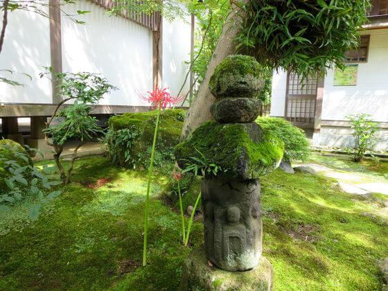 鎌倉 海蔵寺 彼岸花