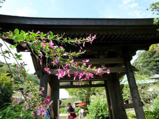 海蔵寺 萩