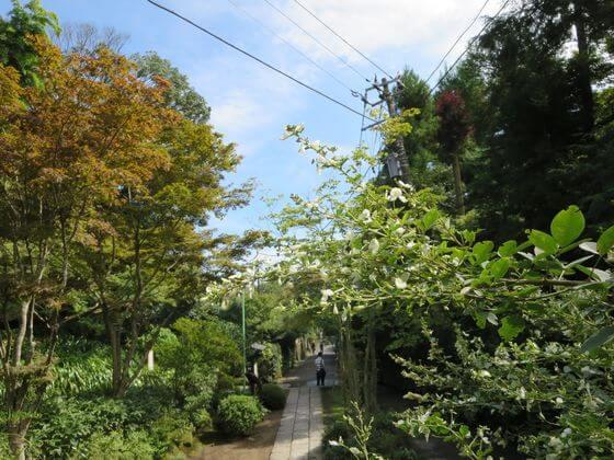 海蔵寺 鎌倉 萩