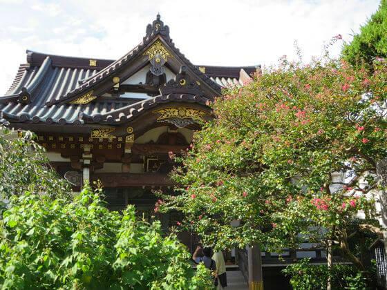 妙隆寺 サルスベリ