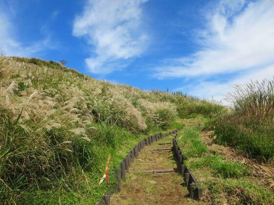 ススキ 大野山