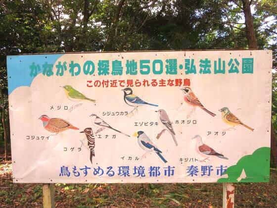 かながわの探鳥地50選 弘法山公園