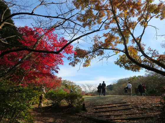 紅葉 源氏山公園
