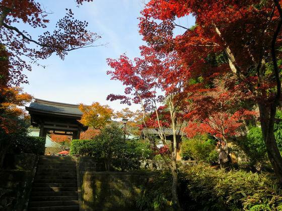 海蔵寺 楓