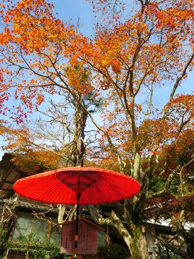 海蔵寺 和傘 紅葉