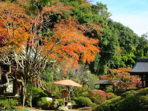 鎌倉 海蔵寺 和傘 紅葉