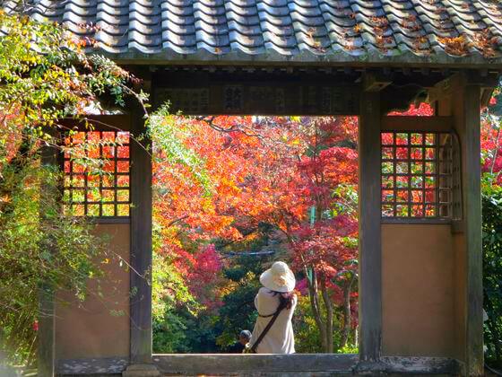 海蔵寺 通用門 紅葉