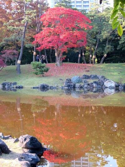 浜離宮恩賜庭園 潮入の池 紅葉