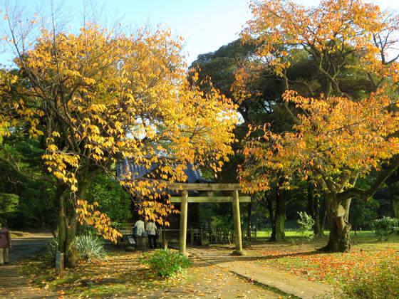 旧稲生神社 紅葉