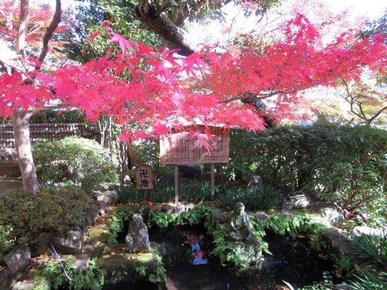 長谷寺 卍池 紅葉