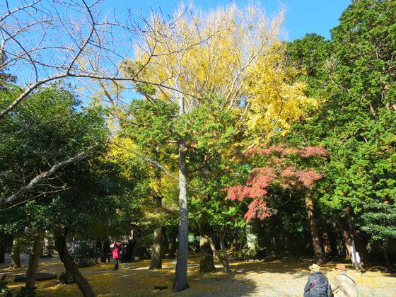 観月堂 高徳院 紅葉