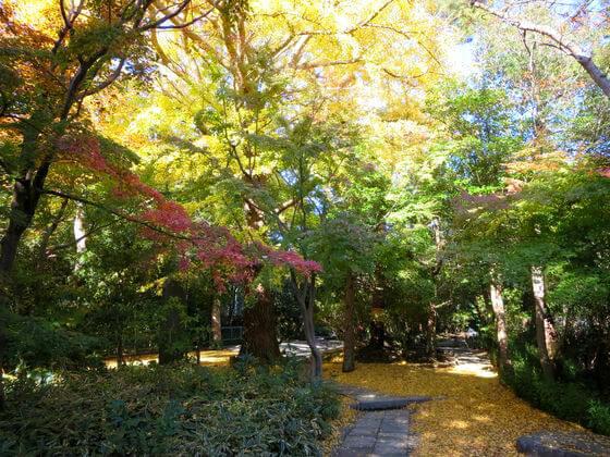 金子薫園歌碑 高徳院 紅葉