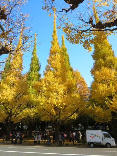 明治神宮 外苑 銀杏並木