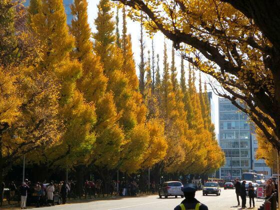 明治神宮 外苑 いちょう並木