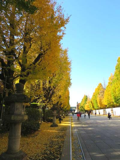 靖国神社 銀杏並木