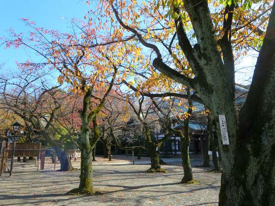 紅葉 靖国神社