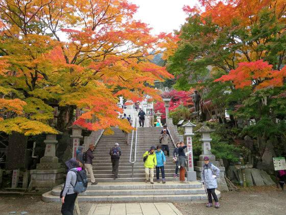 阿夫利神社 石段 紅葉