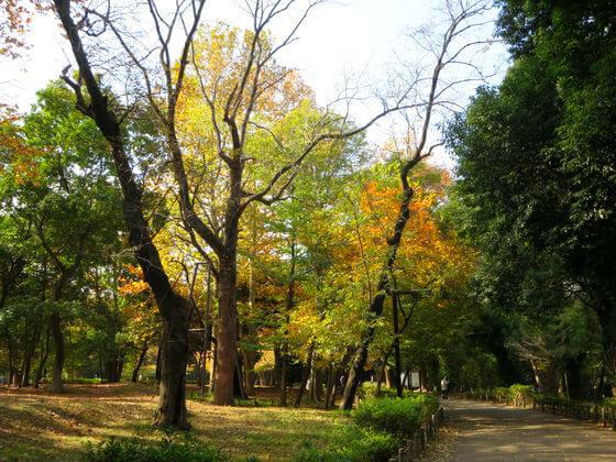 紅葉 林試の森公園