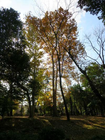林試の森 紅葉