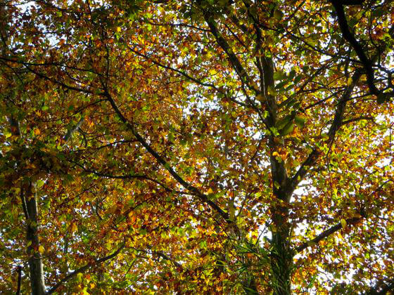 紅葉 林試の森