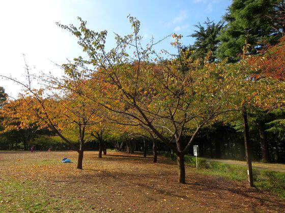林試の森公園 芝生広場 紅葉