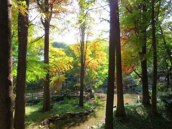 林試の森公園 紅葉