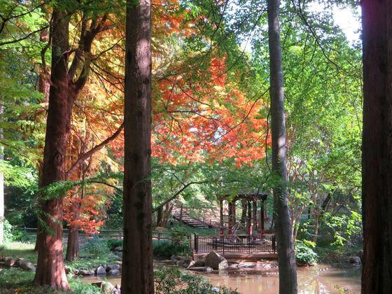林試の森公園 せせらぎ橋 紅葉