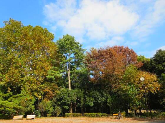 林試の森公園 紅葉 見頃