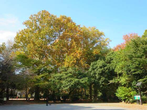 紅葉 林試の森 森の広場