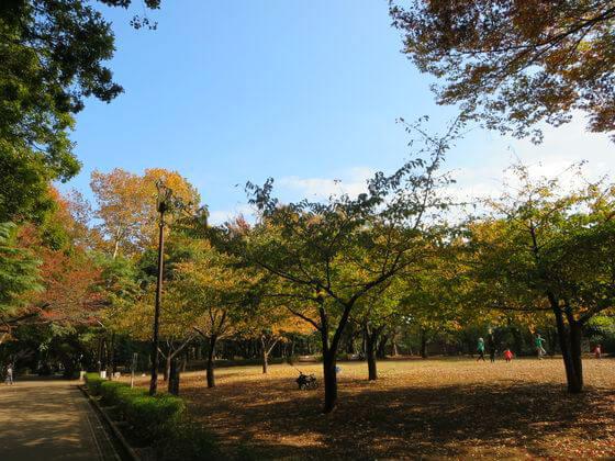 紅葉 林試の森 芝生広場