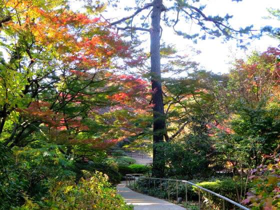 紅葉 東京都庭園美術館