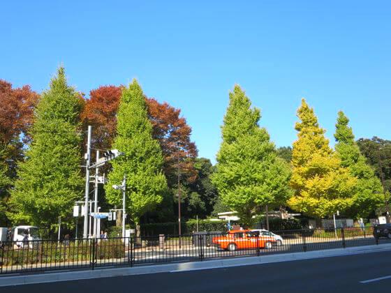 庭園美術館 紅葉