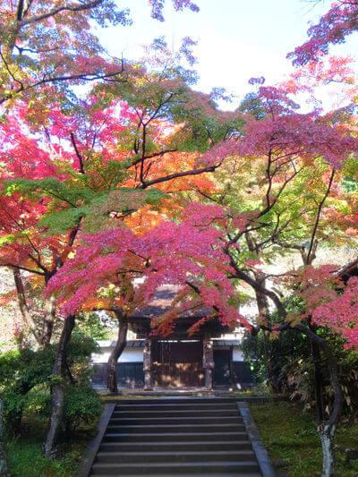 円覚寺 居士林 紅葉