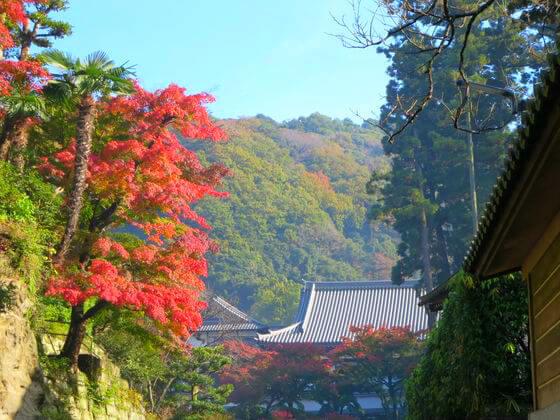 鎌倉 円覚寺 紅葉