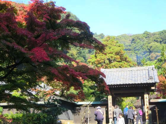 円覚寺 舎利殿 紅葉