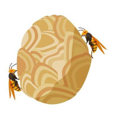 登山 スズメバチ 時期
