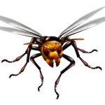 登山・山登りでのスズメバチ対策