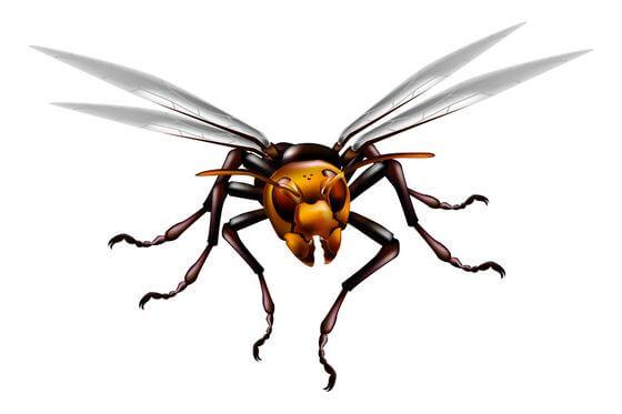 登山 スズメバチ