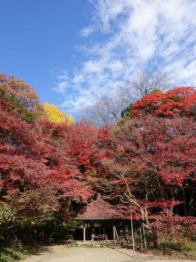 小石川公園 丸屋 紅葉