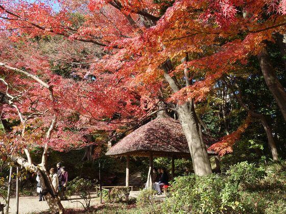 紅葉 小石川公園 丸屋