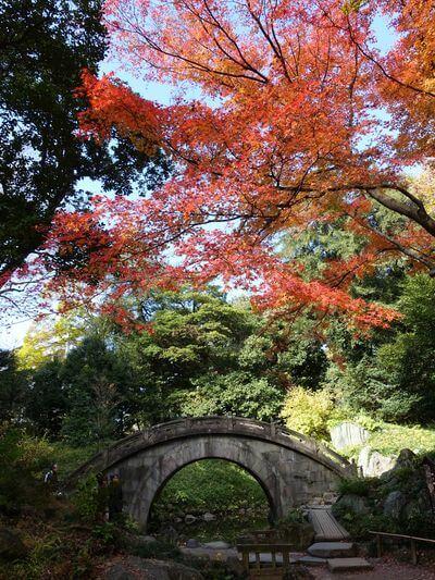 小石川公園 円月橋 紅葉