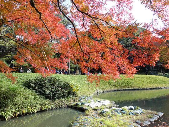 小石川公園 大泉水 楓