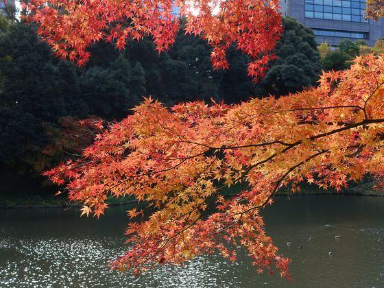 小石川後楽園 紅葉 見頃