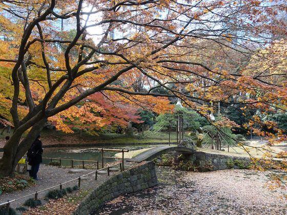 小石川公園 内庭 楓