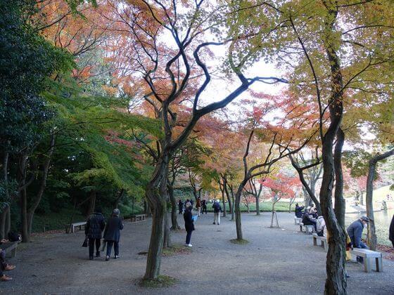 小石川公園 紅葉林 紅葉