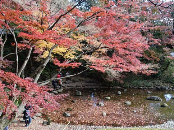 小石川後楽園 紅葉 現在